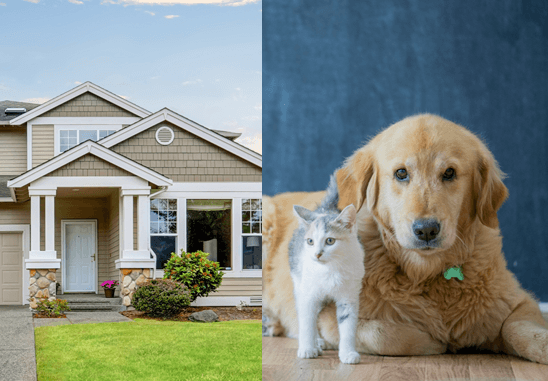 Protecting Pets and Home While You're Away
